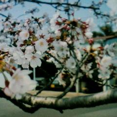 image/hoblog-2007-03-30T16:34:32-2.JPG
